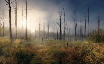 Уходил ночной туман... / Мертвый лес на заброшенных карьерах.