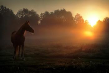 Рассветный конь... / ***