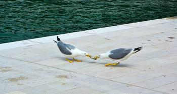 Связующее звено / Каждая птица своим носом кормится.