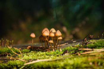 Зелёный лес,маленькие грибочки / Красноярский край г.Железногорск