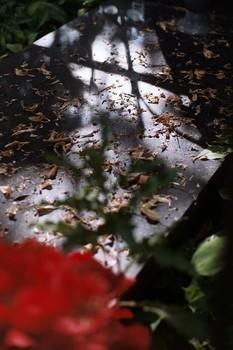 образ к притче / В прошлом столетии один турист из Соединенных Штатов посетил известного раввина Хофеца Хайма. Он удивился, когда увидел, что раввин занимает всего лишь одну простую комнату, сплошь заполненную книгами. Единственной мебелью в ней были стол и скамейка. - А где же ваша мебель?- спросил турист. - А где ваша?- сказал Хофец. - Моя? Но я здесь проездом. Я здесь только гость. - Я тоже.  фото: Минск, Военное кладбище, 2019