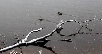 Первый снежок! / Прогулка в парке