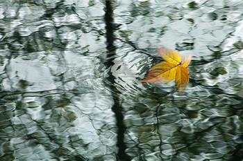 Этюд / Осенний лист как кистью по воде рисует...