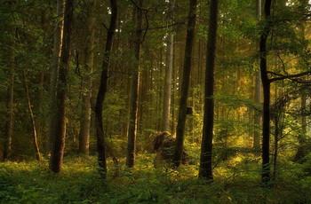 Зори тут тихие.. / В утреннем лесу .