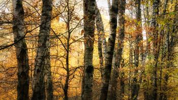 Октябрь во всей своей красе / Октябрь. Солнце меж дождями -  И дождь листвы.