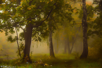 Утренний туман в дубовой роще / снято ранним утром