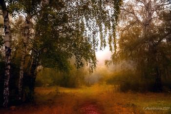 Осенние солнце и туман / туман и солнечные лучи в осенний день. Снято во время прогулки