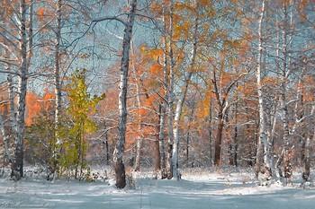 Первый снег / снято во время прогулки