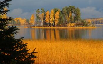 Золото парка Монрепо / Осенние зарисовки парка Монрепо