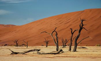 Долина Смерти / Пустыня Намиб. Мертвая долина Дидвлей (Deadvlei) -Окруженная дюнами Соссуфлей (Sossusvlei) глинистая впадина находится на дне высохшего озера ,среди красных дюн, и знаменита окаменевшими деревьями верблюжьей акации