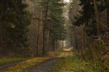 Теплый декабрь / И такая зима бывает.. Пейзаж .