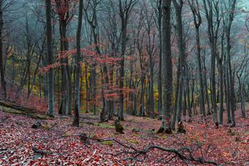Тишина#2 / Осенний лес на горе Бештау