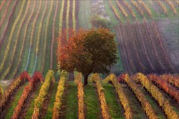 Vinic podzim / Моравские виноградники осенью.