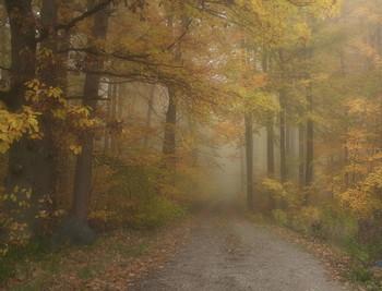 Утро туманное / Осенние туманы . Лесной пейзаж Этюд.