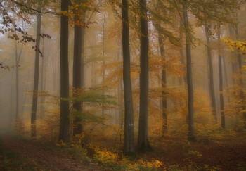 Рыжая осень... / Осенний лесной пейзаж .