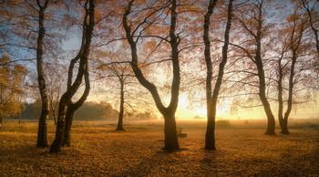 Прощальный танец осени / На ковре из желтых листьев...