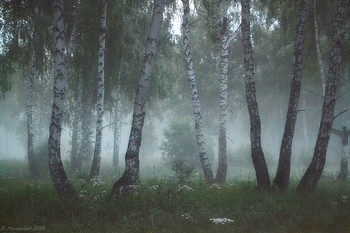 Утро в лесу / ...