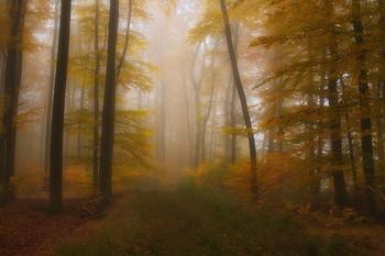 Осенний наряд / Осенний лесной пейзаж . Зарисовка