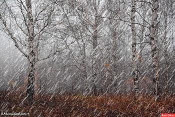 Первый снег / ...