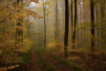 Красивая осень / Лесные осенние наряды .. Пейзаж .