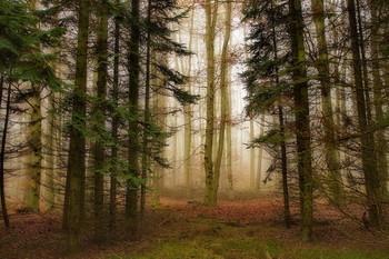 Где прячутся туманы... / Лесной пейзаж .Начало зимы .