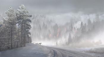 Зимняя прогулка / Зимняя прогулка