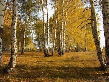 Осенний лес / ...
