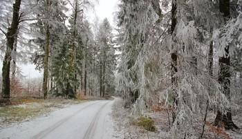 Первые зимние узоры / Туман и мороз создали подобие зимы :)