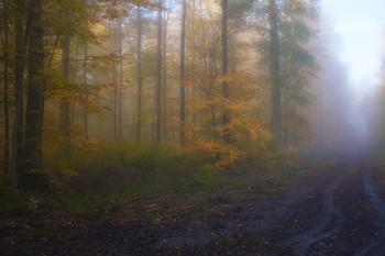 По дороге в осень... / Осенний лесной пейзаж .Туманным утром .