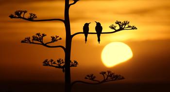 / Silhouette di Guccioni al calar del sole dietro le colline.