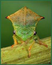 Портрет цикады / Необычное маленькое насекомое,удивительно напоминающее головной убор католических священников.Масштаб съемки 2:1