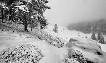 Снег, туман и легкий ветерок / Зима все-таки показала свое лицо, а думали не будет :)