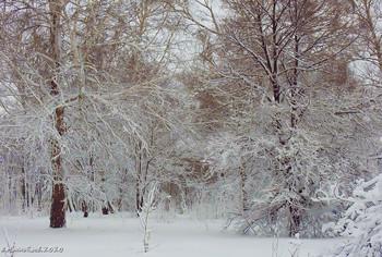 Зимний лес / ...
