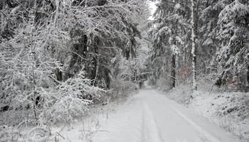 На узенькой дорожке / Заповедника пушистый снег