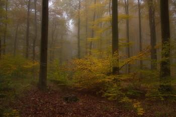 Про осень... / Осенний лесной пейзаж . Этюд.
