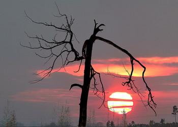 "На подъезде к ""Белому Яру"" / Вечер, закат..."