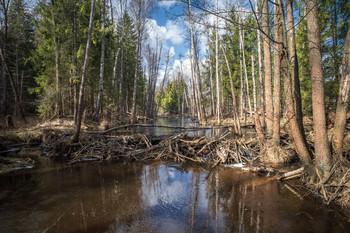 лесные протоки / ***