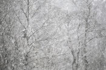 ..апрельский снегопад.. / ....