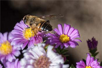 Взаимопомощь / Раз пчела в тёплый день весной, свой пчелиный покинув рой, полетела цветы искать и нектар собирать