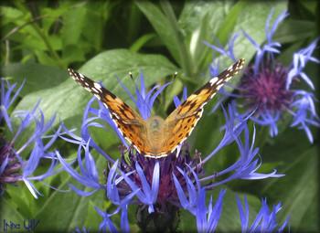 Присела отдохнуть... / Первая бабочка...