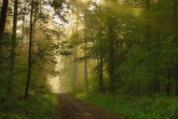 Майские туманы / Утренний лесной пейзаж .