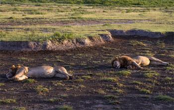 Спят усталые игрушки...) / Серенгети,Танзания