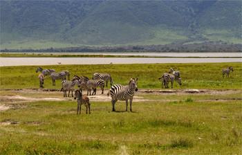 / Нгоронгоро,Танзания