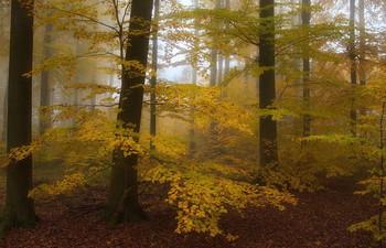 Осенний блюз.. / Воспоминание о прошлогодней осени . Лесной осенний пейзаж .