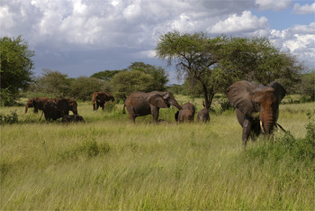 Семья / Танзания,Серенгети