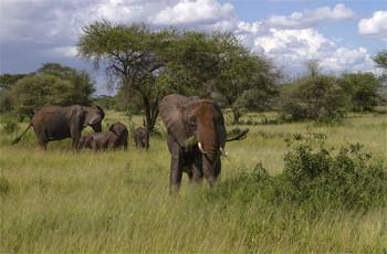 Грязевые ванны... / Национальный парк Серенгети,Танзания