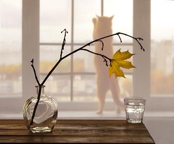 Куда уходит лето??? / случайный кадр... рыжая кошка Лиса-Алиса решила внести свои коррективы в съёмочный процесс...