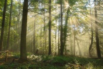 Майские рассветы / Весенний пейзаж .Утро в лесу .