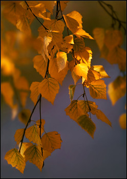 Осеннее... / Со слайда, начало 70-х.