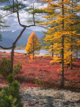 Осенняя палитра Колымы / Вид, открывающийся на озеро в 10-ти метрах от нашего лагеря. Фокус-стекинг из 6 кадров.